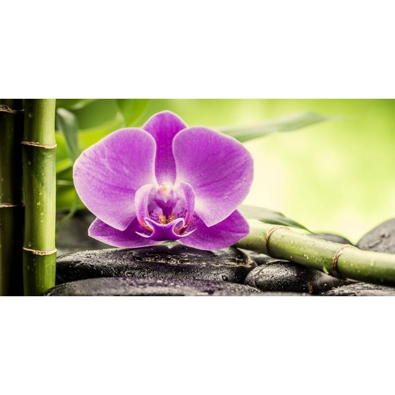 Deko-Panel: Orchidee rosa, 100 x 50 cm