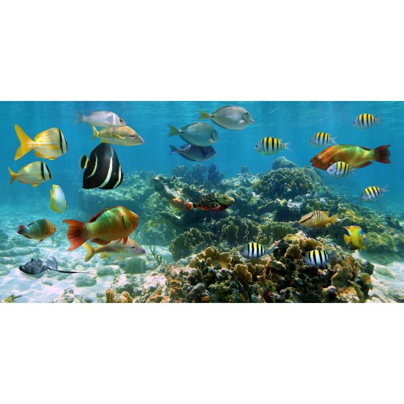 Deko-Panel: Tropical Fish, 100 x 50 cm
