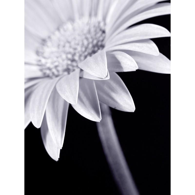Leinwandbild: Blume, 40 x 30 cm