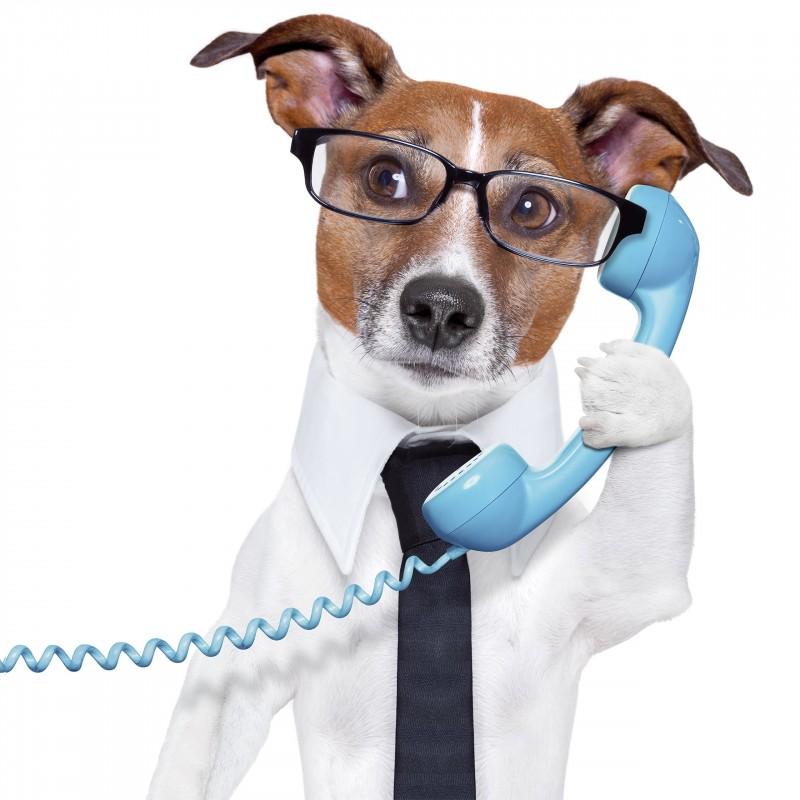 Leinwandbild: Dog in Business, 35 x 35 cm